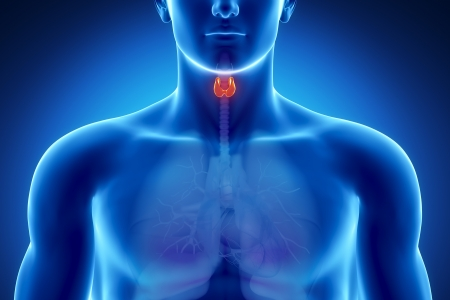 Natural Herbs for Thyroid Problems